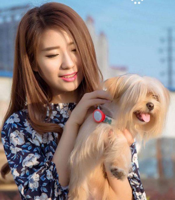 xiaomi-amazpet-activity-tracker-smart-dog-button-tag-prasino06